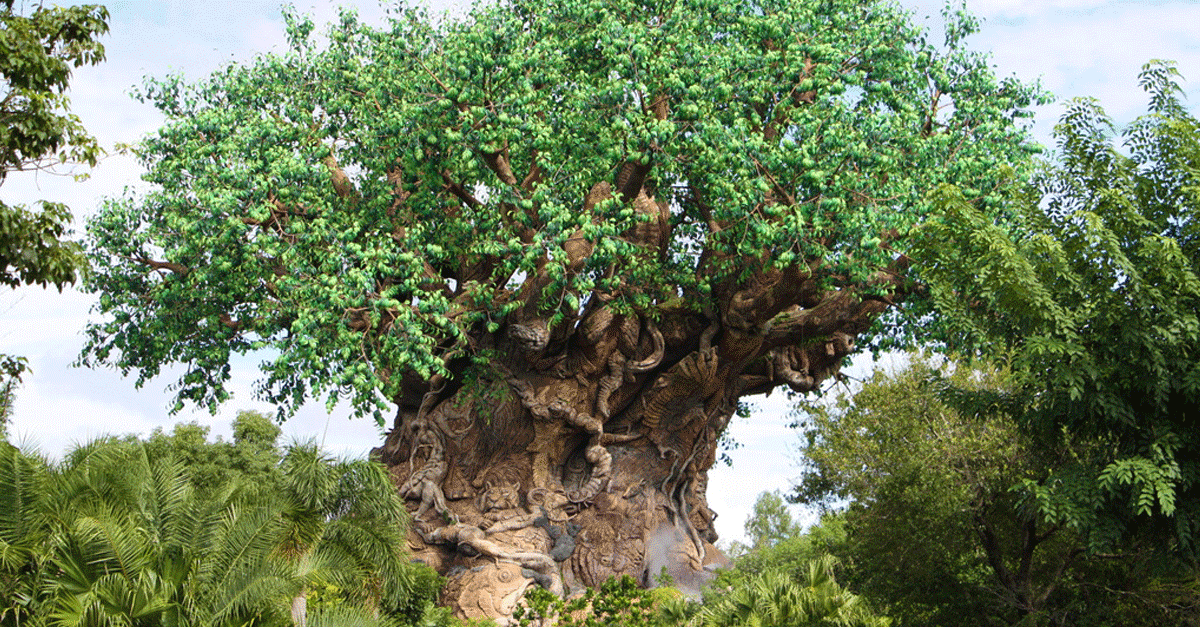 7 Amazing Facts About Animal Kingdom's Tree Of Life