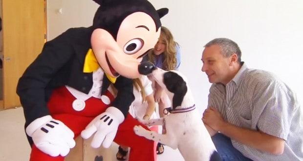 Mickey greets a 4 legged pal