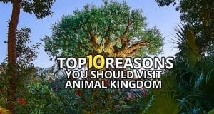 Top 10 Reasons You Should Visit Animal Kingdom