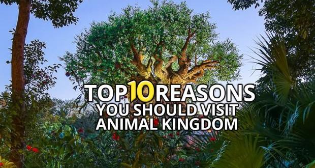 Top 10 Reasons You Should Visit Animal Kingdom