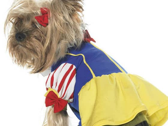 Which Disney Character Would Your Dog Be?
