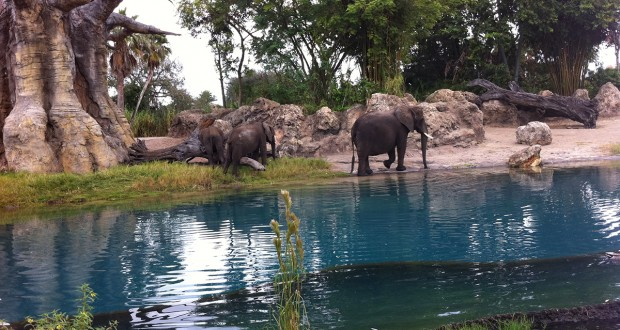 12 Mind Blowing Facts About Kilimanjaro Safaris At Disney