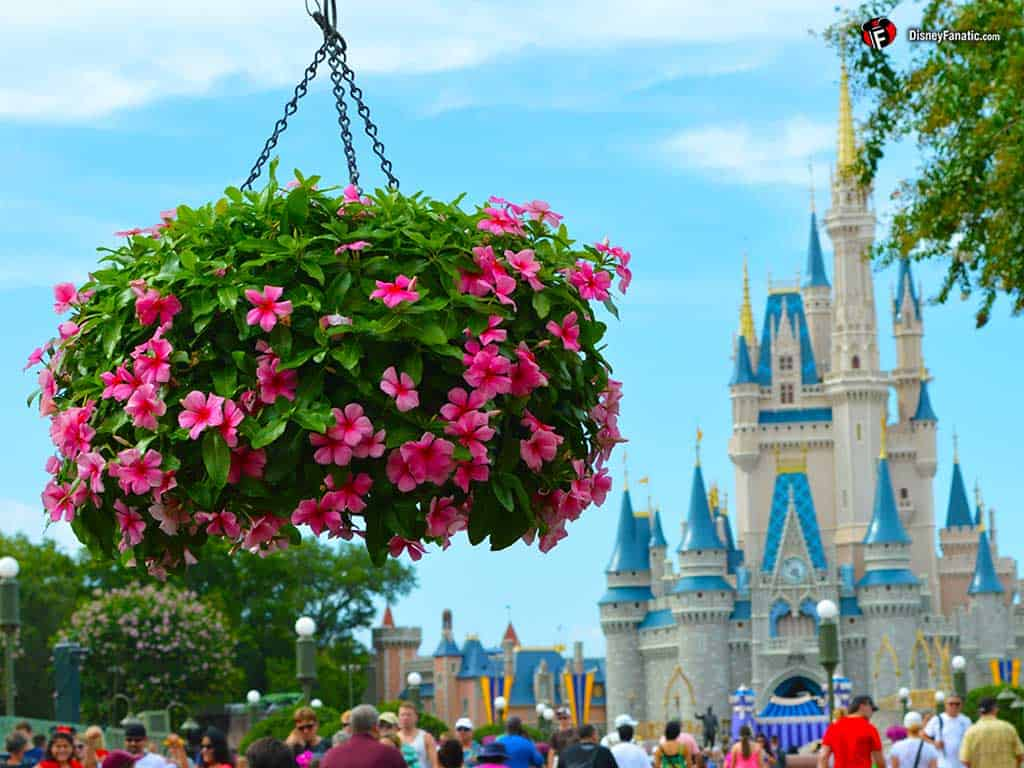 Walt Disney World Resort - Cinderella Castle and Flowers