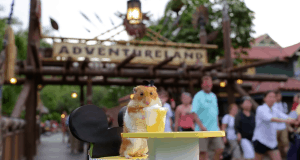 Tiny Hamster at Disney World