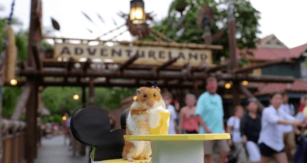 Tiny Hamster at Disney World