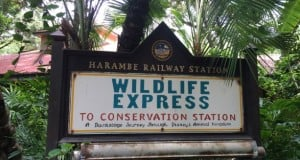 Wildlife Express