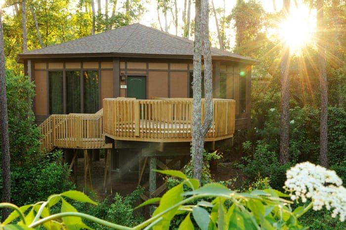 Treehouse at Saratoga Springs