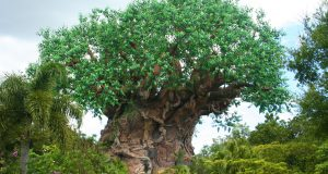 Animal Kingdom Tree