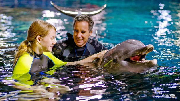 Disney Dolphin Encounters