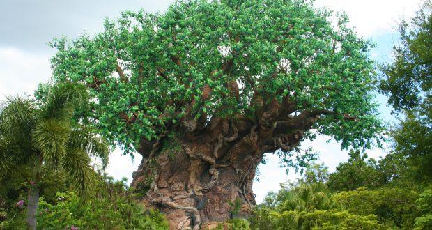 Animal Kingdom Tree