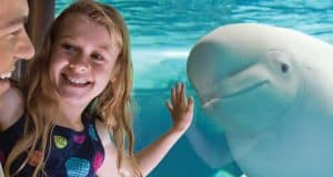 SeaWorld Beluga