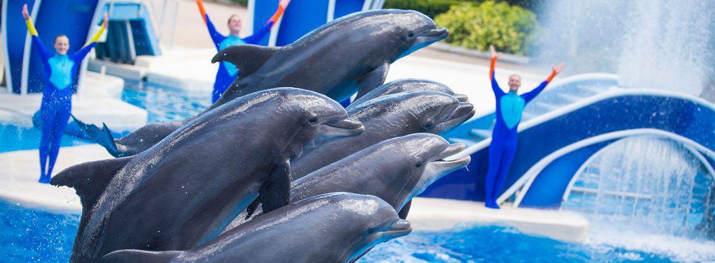 SeaWorld Dolphin Days