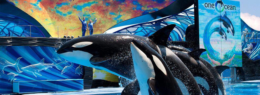 SeaWorld One Ocean