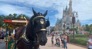Horse Magic Kingdom Castle